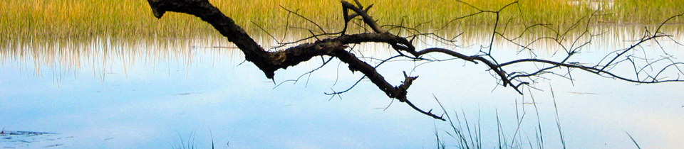Branch-over-Marsh.jpg