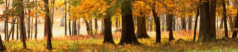 Bundoran_trees.jpg